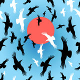 Flocks of crows circling. The sun vector illustration Stock Images