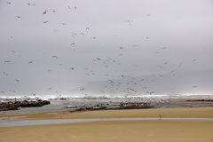 Flocks of seagulls flying along the coastal sand beach Stock Photos