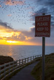 Flocks of starlings above warning sign Royalty Free Stock Photos