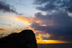 Flocks of starlings flying above ruins at sunset Stock Photo