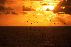 Flocks of starlings flying into a bright orange sunset Royalty Free Stock Photos