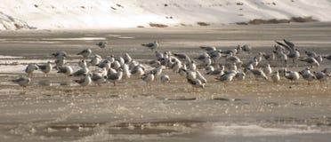 flockseagulls arkivfoto