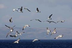 flockseagulls Royaltyfria Foton