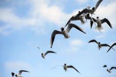 FlockSeagulls i den blåa himlen Royaltyfri Foto