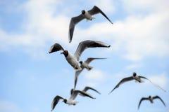 FlockSeagulls i den blåa himlen Royaltyfria Bilder