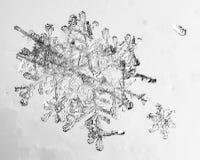 Floco bonito da neve em um claro - fim azul do fundo acima foto de stock royalty free