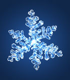 Floco de neve 5 Imagens de Stock