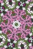 Floco de neve da flor fotografia de stock