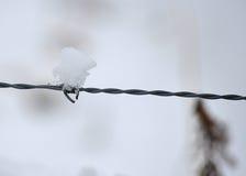 Floco de neve no arame farpado Imagens de Stock Royalty Free