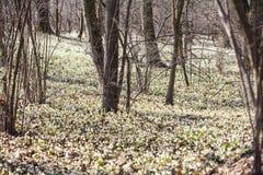 Flocons de neige de ressort Photo stock