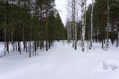 Flocons de neige de givre de carte postale de perspective de croisement de paysage d'hiver photos stock