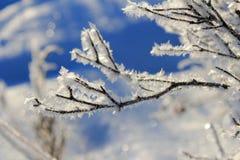 Flocons de neige glacials couvrant une branche photo libre de droits