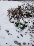 Flocons de neige sur Bussolengo à Noël 2017 Photographie stock libre de droits