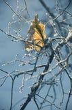 Flocons de neige sur l'herbe Photographie stock