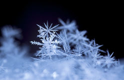 Flocons de neige sur la neige Images stock