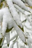 Flocons de neige sur les feuilles en bambou vertes Images stock
