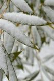 Flocons de neige sur les feuilles en bambou vertes Photographie stock