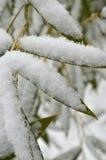 Flocons de neige sur les feuilles en bambou vertes Photo stock
