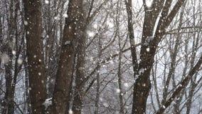 Flocons de neige tombant avec des arbres sur le fond clips vidéos