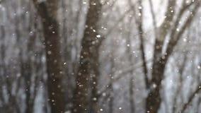 Flocons de neige tombant dans le mouvement lent avec des arbres sur le fond banque de vidéos