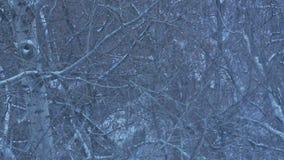Flocons de neige tombant lentement en hiver banque de vidéos