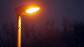 Flocons de neige volant à la lumière d'un lampadaire Photographie stock libre de droits