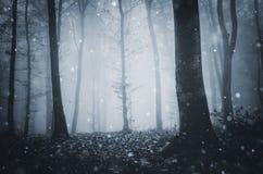 Flocos da neve em madeiras mágicas do inverno foto de stock royalty free