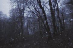 Flocos da neve que caem na floresta escura Fotografia de Stock