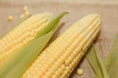Flocos de milho crus imagens de stock royalty free