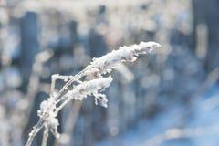 Flocos de neve brancos em uma grama secada Foto de Stock Royalty Free