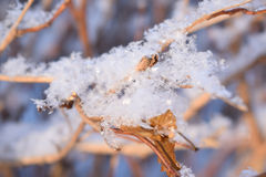 Flocos de neve em um galho Foto de Stock Royalty Free