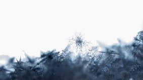 Flocos de neve naturais na neve neve imagem de stock royalty free