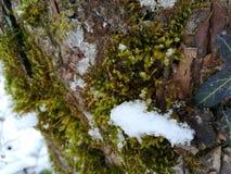 Flocos de neve no musgo imagens de stock