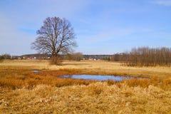 Flod-äng på den tidiga våren Royaltyfri Fotografi