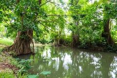 Flod över den gröna trädgården Royaltyfri Bild