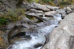 Flod av en skog Royaltyfri Bild
