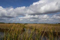 Flod av gräs i Florida Royaltyfri Bild