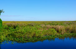 Flod av gräsEvergladesnationalparken Florida Royaltyfri Fotografi