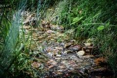 Flod av naturligt vatten med stenar och som omger av vegetation arkivfoto