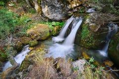 Flod av skogen Arkivfoto