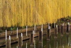Flod avon Arkivfoton