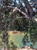 flod bak filialerna av ett träd arkivbild