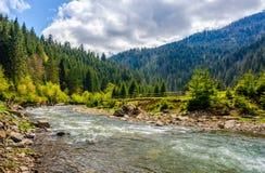 Flod bland skogen i pittoreska berg i vår Arkivfoton