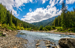 Flod bland skogen i pittoreska berg i vår Arkivbilder