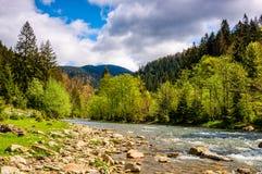 Flod bland skogen i pittoreska Carpathian berg i sp Arkivbild