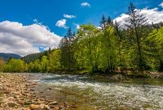 Flod bland skogen i pittoreska Carpathian berg i sp Arkivfoto