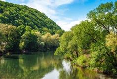 Flod bland skogen i pittoreska Carpathian berg i su Arkivbilder