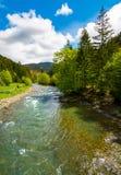 Flod bland skogen i pittoreska Carpathian berg i sp Arkivfoton
