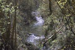 Flod bland skogen som reflekterar solen fotografering för bildbyråer