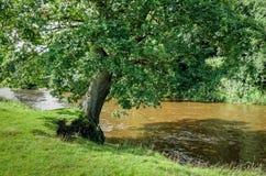 Flod Calder i Lancashire, England arkivbilder